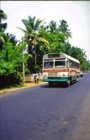 Altuthgama, Linienbus