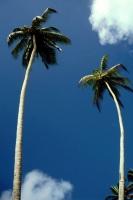 Hikkaduwa, Sunils Beach Hotel, am Strand