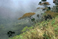 Im jetzigen Nationalpark Horton Plains, World's End