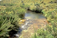 Im jetzigen Nationalpark Horton Plains