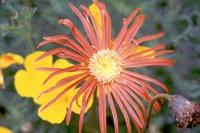 Im jetzigen Nationalpark Horton Plains, Blume im ehemaligen Guesthouse und der jetzigen Horton Plains Cafeteria