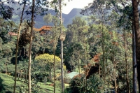auf dem Weg von Nuwara Eliya zurück Richtung Colombo