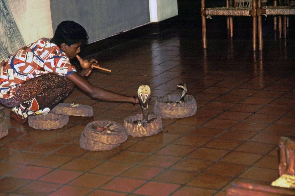 Sigiriya, Schlangenbeschwörer mit Kobras