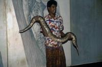 Sigiriya, Schlangenbeschwörer mit Viper