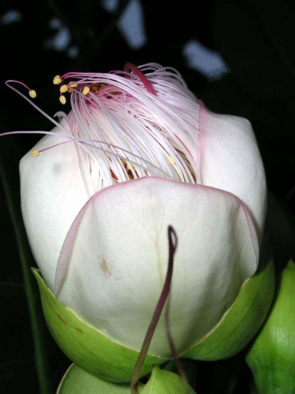 Blüte im Garten des Koggala Beach Hotels