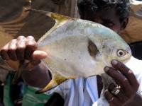Stolzer Fischverkäufer in Galle mit seiner Ware