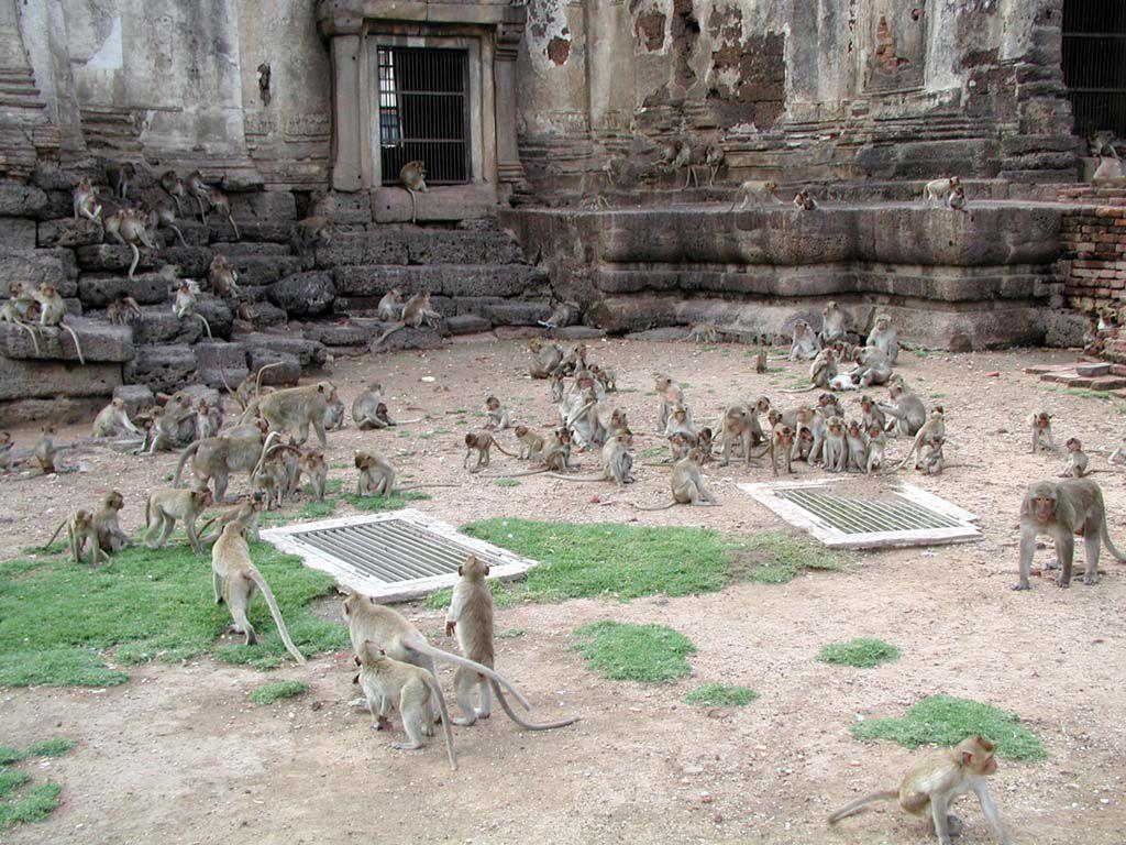 Der Affentempel in Lopburi