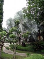 Gartenanlage in einer Orchideenfarm südöstlich von Chiang Mai