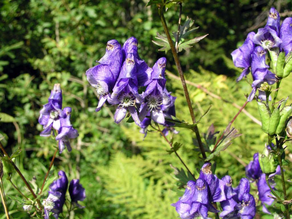Spindlermühle, Blumen