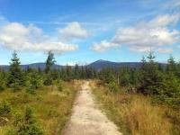 Petzer, Wanderweg im Hochmoor südwestlich des Ortes