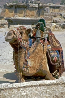 Hierapolis, Kamel