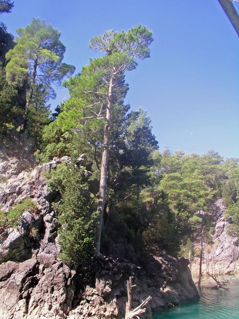 Grüner Canyon