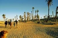 Douz, Kamelritt in die Sandwüste