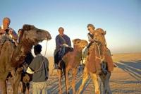 Douz, das Kamel und ich