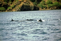Delphine im Nationalpark Mochima