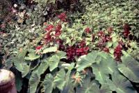 Pflanzen im Öko Park El Guamo