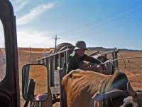 Ochsenkarren 40 Km nördlich von Mui Ne
