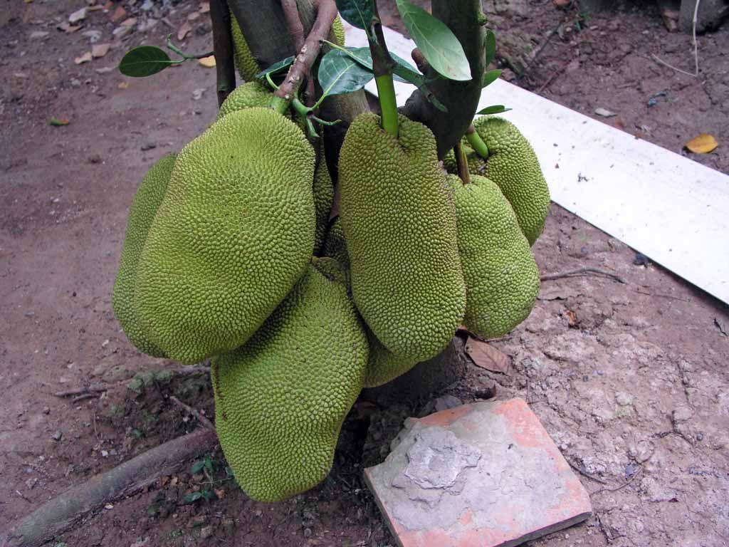 Mekong Delta, Jak Früchte